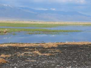Marsh on the shore of Lake Alakol